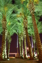 Night view - palm trees Royalty Free Stock Images