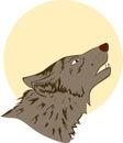 Night wolf Royalty Free Stock Photo