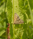 Night yellowish butterfly sitting on a green leaf Stock Photo