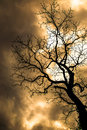 Nightmare tree with a cloudy sky Royalty Free Stock Images