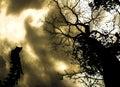 Nightmare tree sky tall pesadilla arbol alto blurry sky leaves coconut Royalty Free Stock Photo