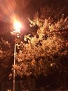 Nighttime in Fall Royalty Free Stock Photo