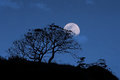 Nighttime with moon and tree silhouette Royalty Free Stock Photo
