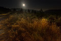 Nighty lanscape with grass and full moon Royalty Free Stock Photos