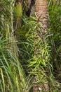 Nikau palm tree trunks covered by vegetation Royalty Free Stock Image