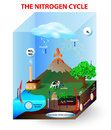 Nitrogen cycle diagram process by which is converted between its various chemical forms this transformation can be Royalty Free Stock Photos