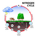 Nitrogen cycle Royalty Free Stock Photo