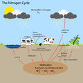 The Nitrogen Cycle Royalty Free Stock Photo