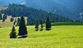 Nizke Tatry meadows