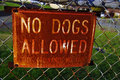 No Dogs Allowed Royalty Free Stock Image