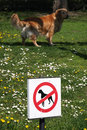 No dogs funny situation with dog present in dog zone Stock Images