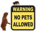 No pets allowed Royalty Free Stock Photography