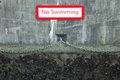 No swimming sign on a canal wall damp concrete with visible water Stock Photos