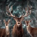 Noble deer family in winter snow forest. Artistic winter Christmas landscape. Square format. Royalty Free Stock Photo
