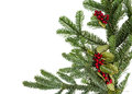 Noble fir bough with holly and berries Royalty Free Stock Images