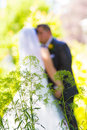 Noivos wedding day Fotografia de Stock Royalty Free