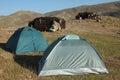 Nomad nomadic turkmen chosen lifestyle Royalty Free Stock Photo