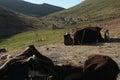Nomad nomadic turkmen chosen lifestyle Stock Photos