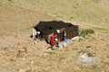 Nomad nomadic turkmen chosen lifestyle Royalty Free Stock Photos
