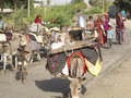 Nomadic indian women ghanerao india march leading some donkeys on the road on march in ghanerao india Stock Photo