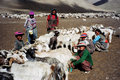 Nomads in ladakh india till date the people of are semi and take their yak sheep and goats to the high altitude pastures behind Stock Image
