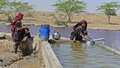 Nomads tribes nomadic s collecting water from the reservoir at runn of kutch gujarat Stock Photo