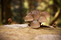 Non edible mushrooms on tree stump Stock Image