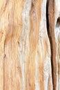 粗砺的树桩木头 库存照片
