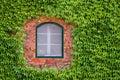 πράσινο παράθυρο