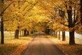 дорога осени Стоковая Фотография RF