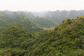 在绿色森林的视图 免版税图库摄影