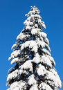 Елевое верхнее покрытое трудным снежком Стоковое Фото