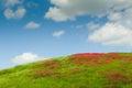 Λουλούδια στο λόφο Στοκ εικόνα με δικαίωμα ελεύθερης χρήσης