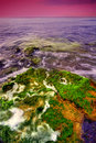 在岩石的海草在海运 库存图片