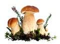 森林蘑菇 免版税库存照片