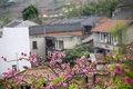 Цветение и дома Стоковое Изображение RF