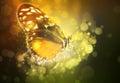 Πεταλούδα σε ένα όνειρο
