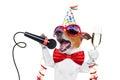 Новый Год собаки счастливое