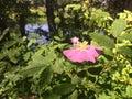 美好的风景远足在原野 图库摄影