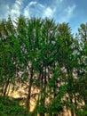 日落通过? ?构树 库存图片