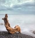 тимберс моря ночи Стоковое Фото