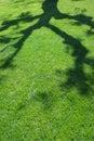 καλοκαίρι σκιάς Στοκ Εικόνες