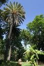 庭院我马德拉岛 免版税库存照片