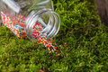 Nonpareils strew on moss Royalty Free Stock Photo