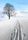 Nordic ski track and tree in field with single bare Stock Photos