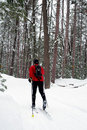 Nordic Skier in Pine Forest Stock Photo