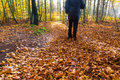 Nordic walking sport run walk motion blur outdoor person legs fo cultivating the figure of a man in the autumn in the forest Royalty Free Stock Image
