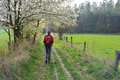 Nordic walking trees in the blossom and mature woman with sticks Stock Photography