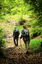 Nordic walking young couple on path in the forest rear view Stock Images