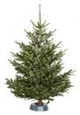 Nordmann Christmas Tree